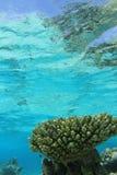 tropisk korallrev Arkivfoto