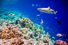 tropisk korallrev Arkivfoton