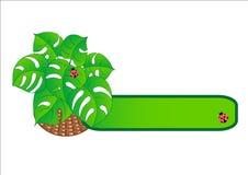 tropisk korgväxt Fotografering för Bildbyråer