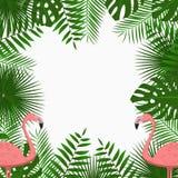 Tropisk kort-, affisch- eller banermall med djungelpalmträdsidor och rosa flamingofåglar exotisk bakgrund vektor royaltyfri illustrationer