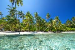 tropisk kust Royaltyfri Foto