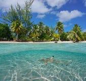 Tropisk kust och en haj undervattens- Polynesien royaltyfri bild