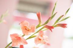 Tropisk lös blomma Royaltyfria Bilder