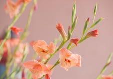Tropisk lös blomma Arkivfoto