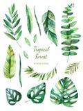 Tropisk lövrik samling Blom- beståndsdelar för Handpainted vattenfärg stock illustrationer