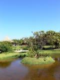 tropisk lake royaltyfri foto