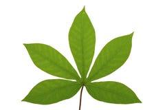 tropisk leaf Royaltyfria Bilder