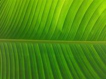 tropisk leafväxt arkivfoto