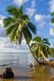 tropisk liggande Royaltyfri Fotografi