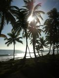 tropisk liggande Royaltyfri Foto