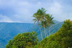 tropisk liggande arkivfoton