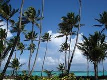 tropisk liggande Royaltyfria Foton
