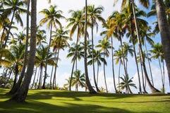 tropisk liggande Fotografering för Bildbyråer