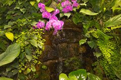 Tropisk liten vattenfall bland gr?na v?xter och rosa orkid?r arkivfoto