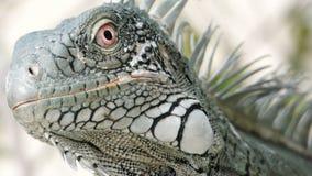 Tropisk lizzard Arkivfoto