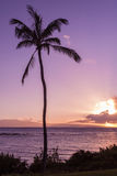 Tropisk Maui solnedgång Arkivfoto