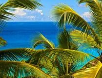 tropisk melodi Arkivbild
