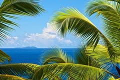 tropisk melodi Royaltyfria Foton