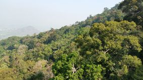 Tropisk mest raiforest Arkivbilder