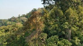 Tropisk mest raiforest Arkivfoto