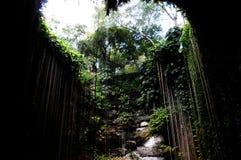 tropisk mexico sinkhole Arkivfoton