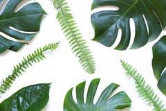 Tropisk modell för sidasommarbegrepp på den vita bakgrunden royaltyfri fotografi