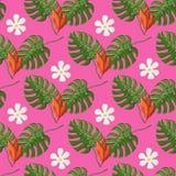 Tropisk modell med monsterasidor och blommor på en rosa färg royaltyfri illustrationer