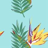 Tropisk modell med sidor stock illustrationer
