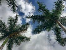 Tropisk molnig dag royaltyfria foton