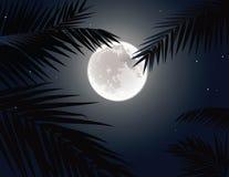 Tropisk moon Royaltyfria Bilder