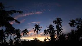 Tropisk nattsikt av palmträd och solnedgånghimmel Royaltyfria Bilder