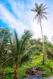 tropisk natur thailand arkivbilder