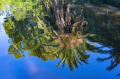 Tropisk naturbakgrund Royaltyfria Foton