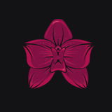 tropisk orchid Royaltyfri Foto