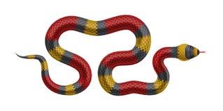Tropisk orm som isoleras på vit bakgrund Arkivbilder