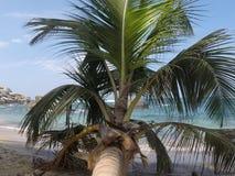 Tropisk palmträd royaltyfria foton