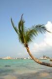 Tropisk palmträd Fotografering för Bildbyråer