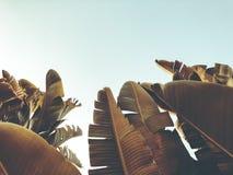 Tropisk palmträd Abstrakt begrepp gömma i handflatan textur för naturbakgrund Royaltyfria Bilder