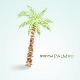 Tropisk palmträd för vektor Grungevektor Royaltyfri Fotografi