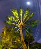 Tropisk palmträd i månskenet Arkivfoto