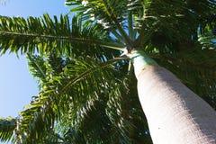 Tropisk palmträd med ljus blå himmel, abstrakt begrepp Royaltyfria Foton