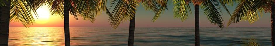 Tropisk panorama, solnedgången och palmträd Arkivbilder