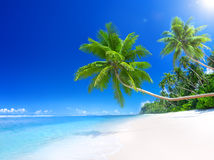 Tropisk paradisstrand med palmträdet Royaltyfri Foto