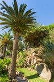 tropisk park Fotografering för Bildbyråer