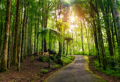 tropisk park Royaltyfri Fotografi