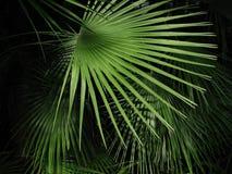 tropisk plats Arkivbilder