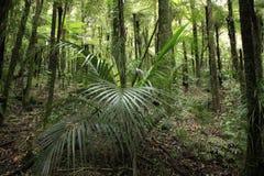 Tropisk plats arkivbild