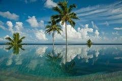 tropisk pölsimning Arkivbilder