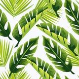 tropisk prydnad green leaves också vektor för coreldrawillustration vektor illustrationer