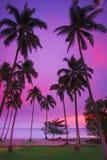 tropisk purpur solnedgång Arkivfoto
